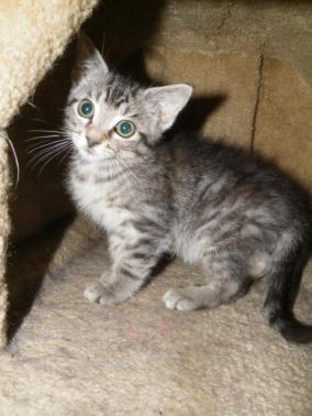 Rolex8315_DSCF9229 Impy as Kitten 7 28 2017