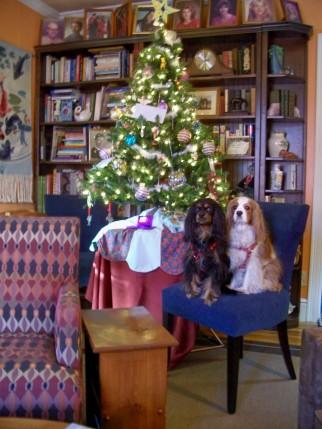 100_1249A Cara Markey Christmas tree.jpg