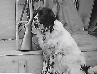 Scan_0045 Dog Patches after a Hunt with Dad - Copy