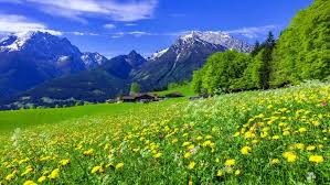 download mountain meadow for blog Mountain Top or Balance 4 16 2020